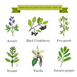 Vintage collection of hand drawn medical herbs and plants, aconite, black chokeberry, fenugreek, sesame, vanilla. Jamaica pepper. Botanical vector illustration Royalty Free Stock Images