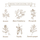 Vintage collection of hand drawn medical herbs and plants, aconite, black chokeberry, fenugreek, sesame, vanilla. Jamaica pepper. Botanical vector illustration Stock Photography