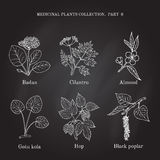 Vintage collection of hand drawn medical herbs and plants badan, cilantro, almond, gotu cola, hop, black poplar Royalty Free Stock Photo