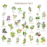 Vintage collection of hand drawn medical herbs and plants. Botanical set Stock Photos