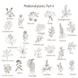Vintage collection of hand drawn medical herbs and plants. Botanical set Royalty Free Stock Photo