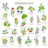 Vintage collection of hand drawn medical herbs and plants. Botanical set Royalty Free Stock Photos