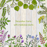 Vintage collection of hand drawn medical herbs and plants Royalty Free Stock Photography