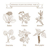 Vintage collection of hand drawn medical herbs and plants Royalty Free Stock Photo