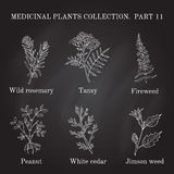 Vintage collection of hand drawn medical herbs and plants. Royalty Free Stock Images