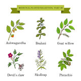 Vintage collection of hand drawn medical herbs and plants Stock Photography