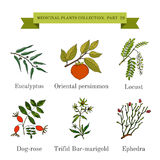 Vintage collection of hand drawn medical herbs and plants, eucalyptus, persimmon, locust, dog-rose, trifid bur-marigold Royalty Free Stock Photos