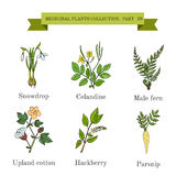 Vintage collection of hand drawn medical herbs and plants, snowdrop, celandine, male fern, cotton, hackberry, parsnip. Royalty Free Stock Images