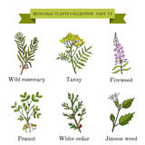 Vintage collection of hand drawn medical herbs and plants. Wild rosemary, tansy, fireweed, peanut, white cedar, jimson weed. Botanical vector illustration Stock Images