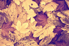 Vintage color autumn leaves collage background Stock Photo
