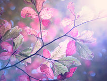 Vintage color autumn season beech leaves background Royalty Free Stock Images