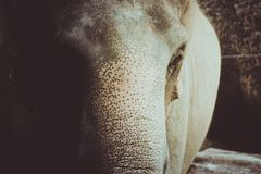Vintage color of elephant. royalty free stock photos