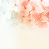 Vintage color flowers in soft and blur style on mulberry paper texture Royalty Free Stock Photography