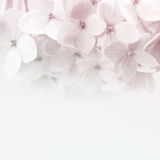 Vintage color flowers in soft and blur style on mulberry paper texture Royalty Free Stock Image