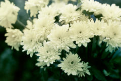 Vintage color tone style of flowers, soft focus and blur Royalty Free Stock Images