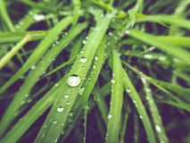 Vintage color tone of water droplets on the surface of the grass leaves. stock photo