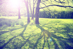 Vintage colored sunny blurred spring season park trees Stock Images