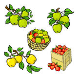 Vintage colorful apple harvest set. Fully editable EPS10 vector. Stock Photography