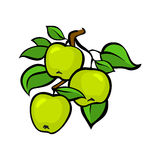 Vintage colorful apple harvest set. Fully editable EPS10 vector. Royalty Free Stock Photo
