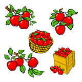 Vintage colorful apple harvest set. Fully editable EPS10 vector. Stock Photo