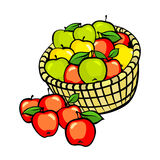 Vintage colorful apple harvest set. Fully editable EPS10 vector. Royalty Free Stock Photos