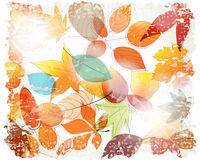 Vintage colorful autumn leaves illustration Royalty Free Stock Photo
