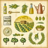 Vintage colorful olive harvest set Stock Photo