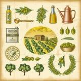 Vintage colorful olive harvest set royalty free illustration