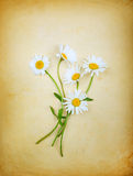 Vintage composition with a bouquet of daisies Royalty Free Stock Photo