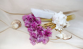 Vintage composition with pink dry flowers, feather and shellfish Royalty Free Stock Photo