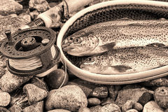 Vintage concept of Fly Reel and pole with trout in net Stock Images
