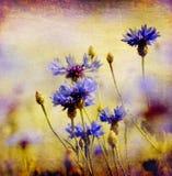 Vintage cornflowers Royalty Free Stock Image