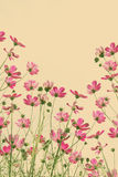 Vintage cosmos flower. Stock Image