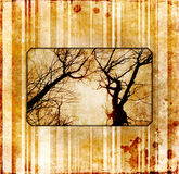 Vintage cover with photo of tree Stock Photography