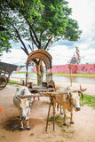 Vintage cow cart. In Thailand Royalty Free Stock Photo