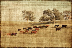 Vintage Cows Landscape Stock Photo