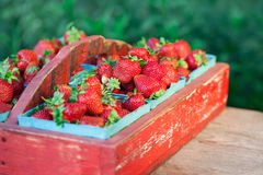 Vintage Crate of Strawberries Royalty Free Stock Image