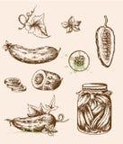 Vintage cucumbers Royalty Free Stock Image