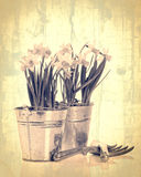 Vintage Daffodils Stock Images