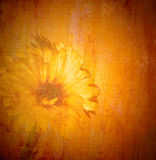 Vintage daisy background Stock Photo