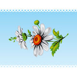 Vintage daisy flower. Vector. Stock Photography