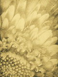 Vintage Daisy Imprint Stock Photography