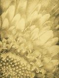 Vintage Daisy Imprint stock photography