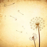 Vintage Dandelion Background Royalty Free Stock Photo