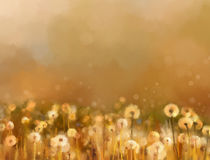 Vintage dandelion flowers in the meadows Royalty Free Stock Images