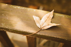 Vintage de feuilles d'automne rétro Photos libres de droits