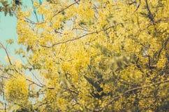 Vintage de fleur douche ou de fistule d'or de casse Photos stock