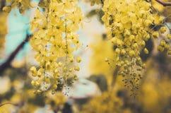 Vintage de fleur douche ou de fistule d'or de casse Images libres de droits