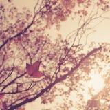 Vintage de forêt en bois de feuilles d'automne Photo stock