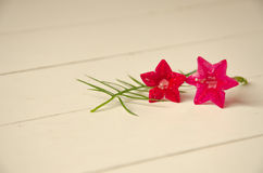 Vintage de la flor imagen de archivo